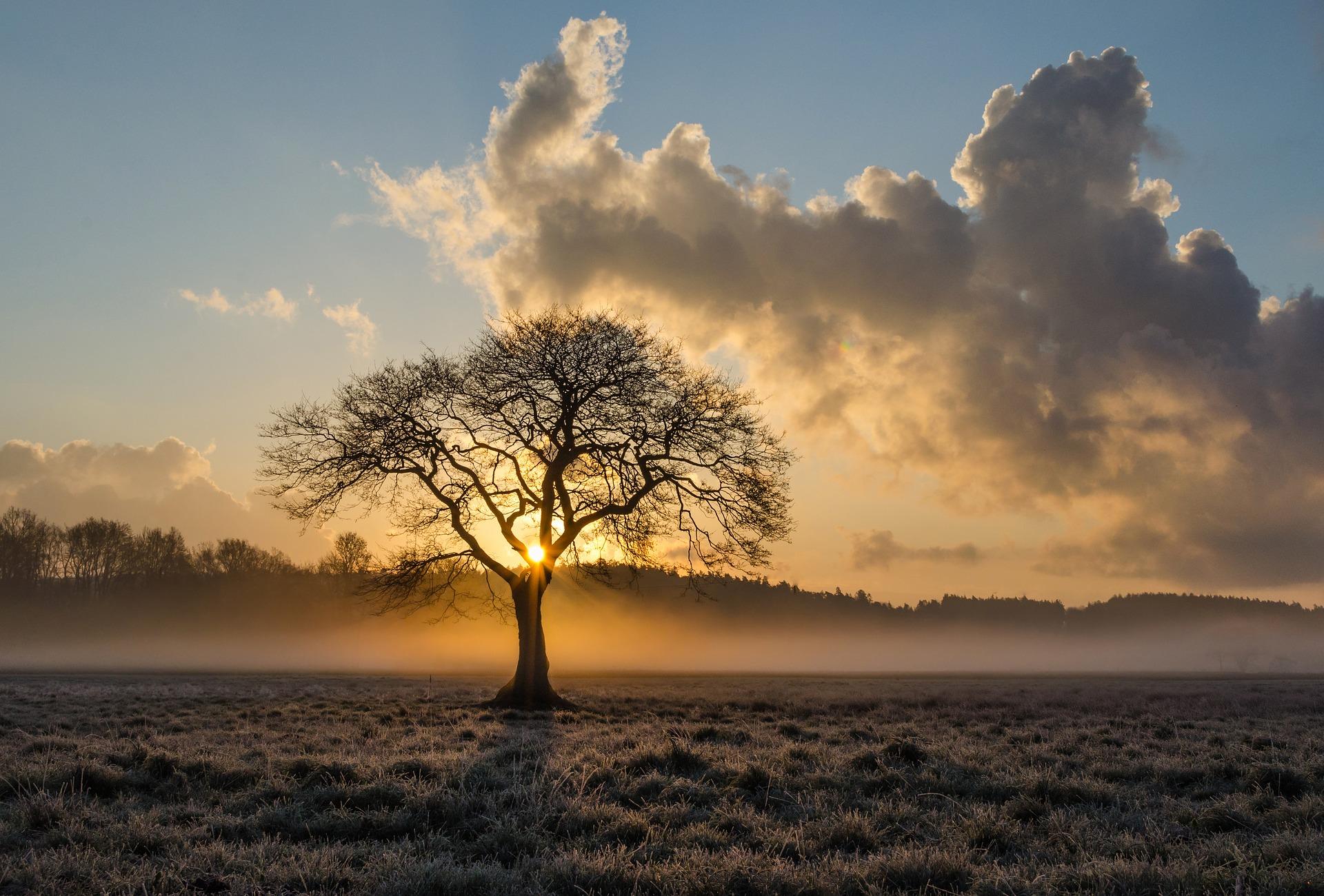 lone-tree-Landscape- photo - tip